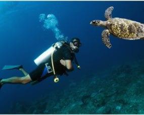 La plongée sous-marine au Caraïbe