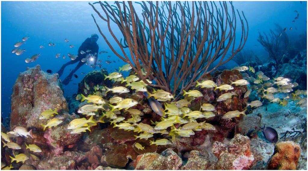 La Plongée à Bonaire au Caraïbe