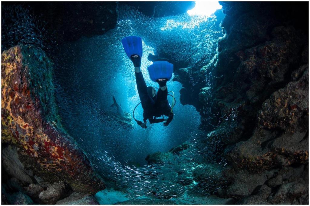 Plongée aux Îles Caïmans, Caraïbe